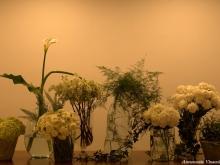 Laboratorio Floreale Aiello Piano di Sorrento, foto A.Vinaccia